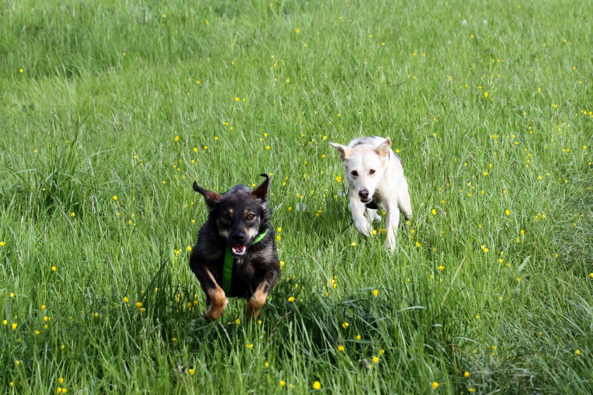 Mila&Sherry_84.JPG